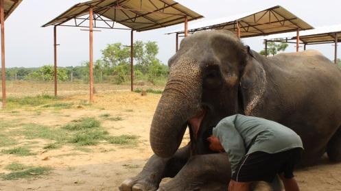 Kasara-Resort-Elephant