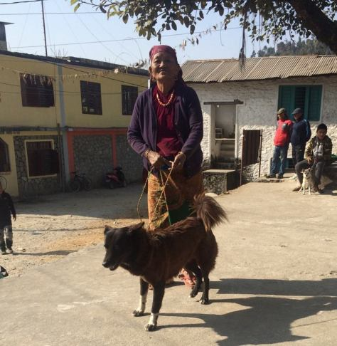 Himalayan-Animal-Rescue-Trust-Nepal-1