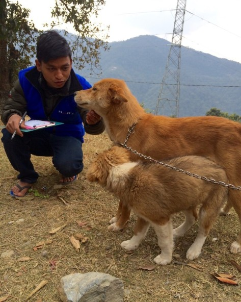 Himalayan-Animal-Rescue-Trust-Nepal